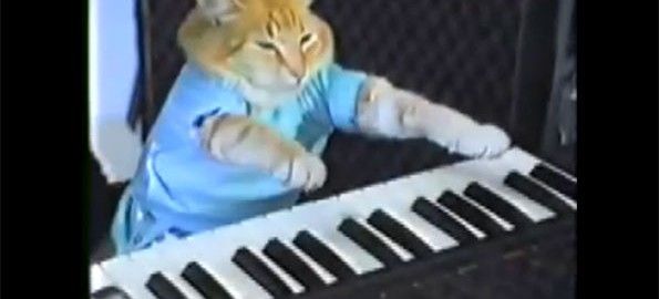 keyboard-cat-1431028292