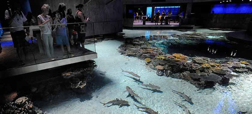 Related keywords suggestions for national aquarium for Aquarium washington dc