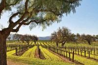 vineyard-santa-ynez-valley