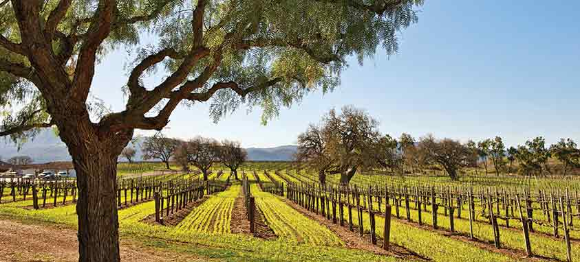 Explore California's Other Wine Country