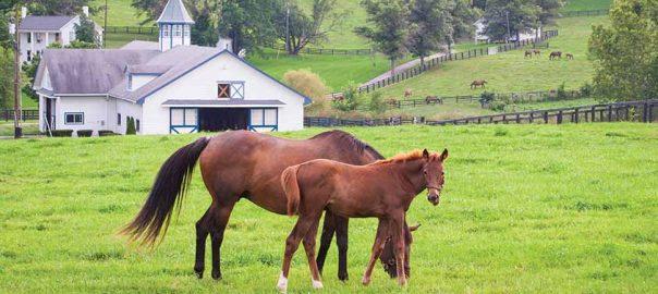 ky-horses_large