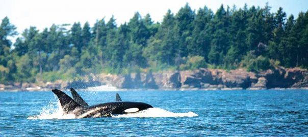 dec16-dn_01-whales