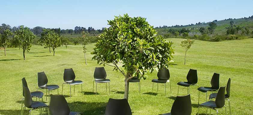 Organize A Green Event