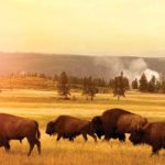 Wide-Open Possibilities in Idaho, Montana and Wyoming
