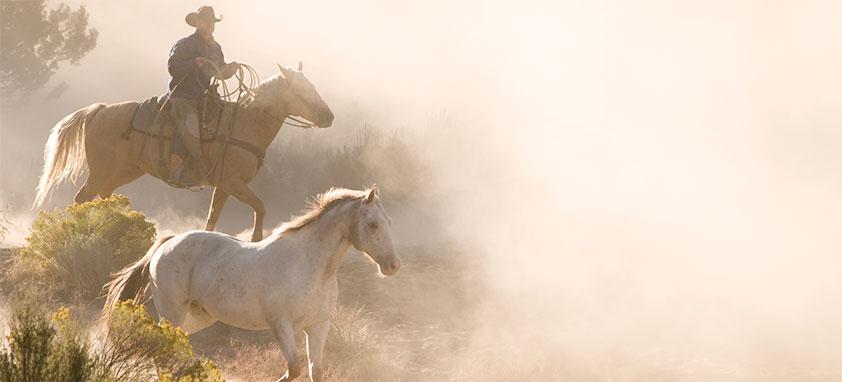 Texas-meetings-cowboy