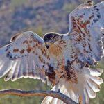 Tucson Meetings Offer Attendees a Desert Feast