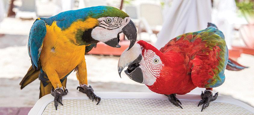 Yucatan birds